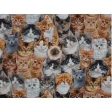Adorable Pets - Cats